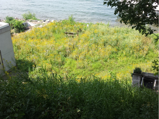 Shoreline re-vegetated with native prairie plants.